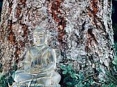 Meditation - little transparent glass buddha nearly lost in the tree bark