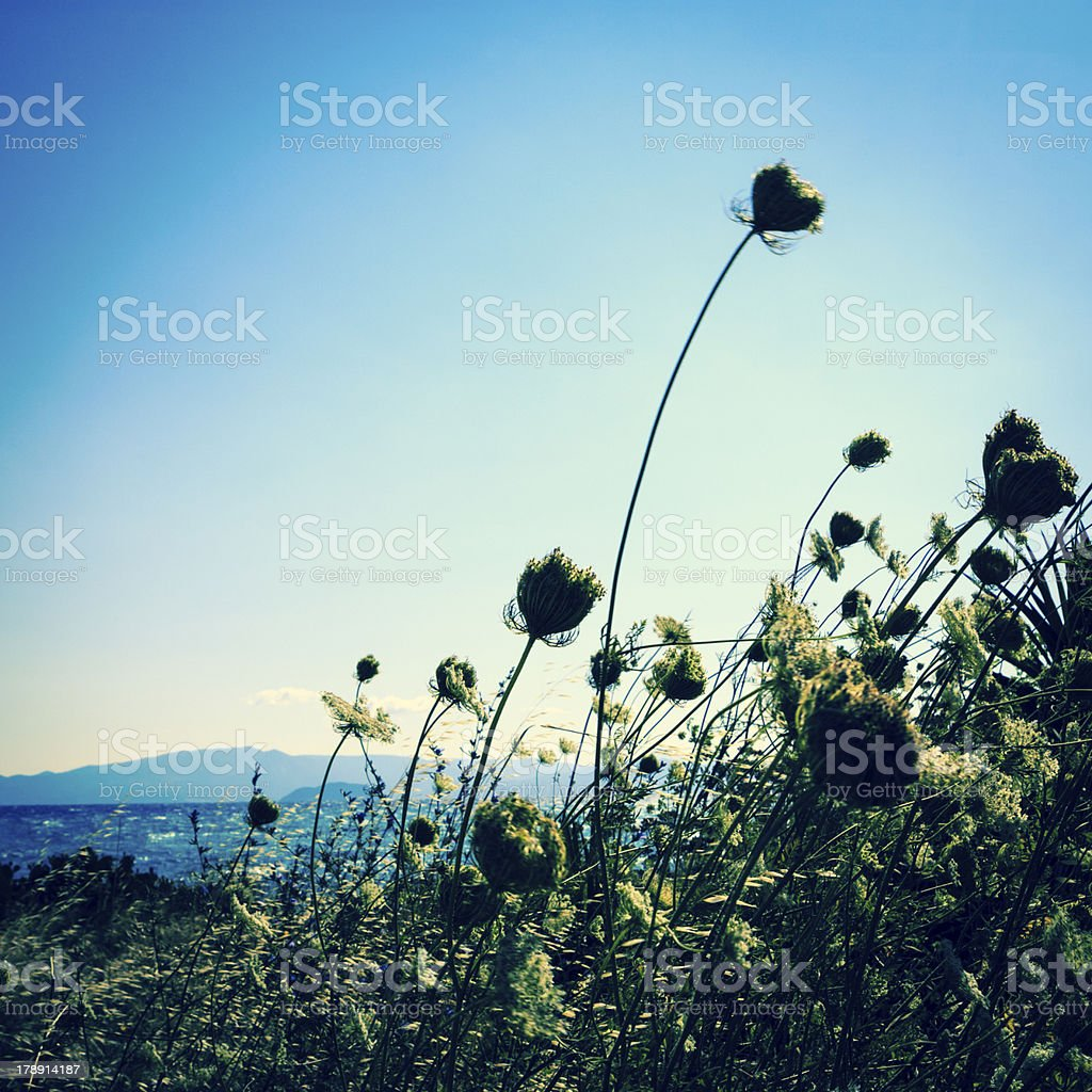 Mediterranean beach flowers royalty-free stock photo