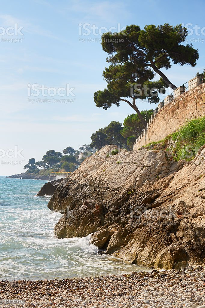Mediterranean coast and sea with maritime pine stock photo