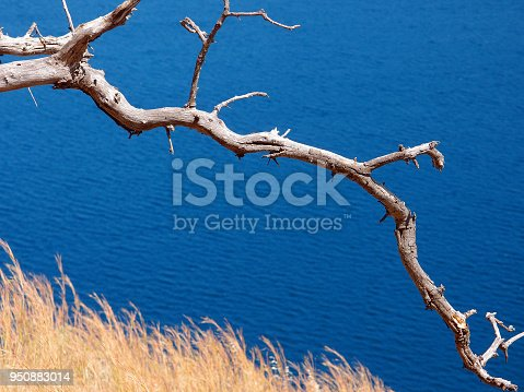 1083309578 istock photo Mediterranean colourful landscape. Dry olive branch against the blue sea, dry grass 950883014