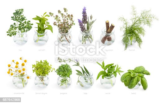 Group of fresh herbs sprouts in a glass jar isolated over white, herb species used in Mediterranean cuisine