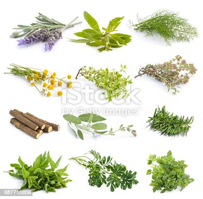 Group of fresh herbs sprouts isolated over white, herb species used in Mediterranean cuisine
