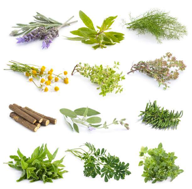 Mediterranean cuisine fresh herbs stock photo