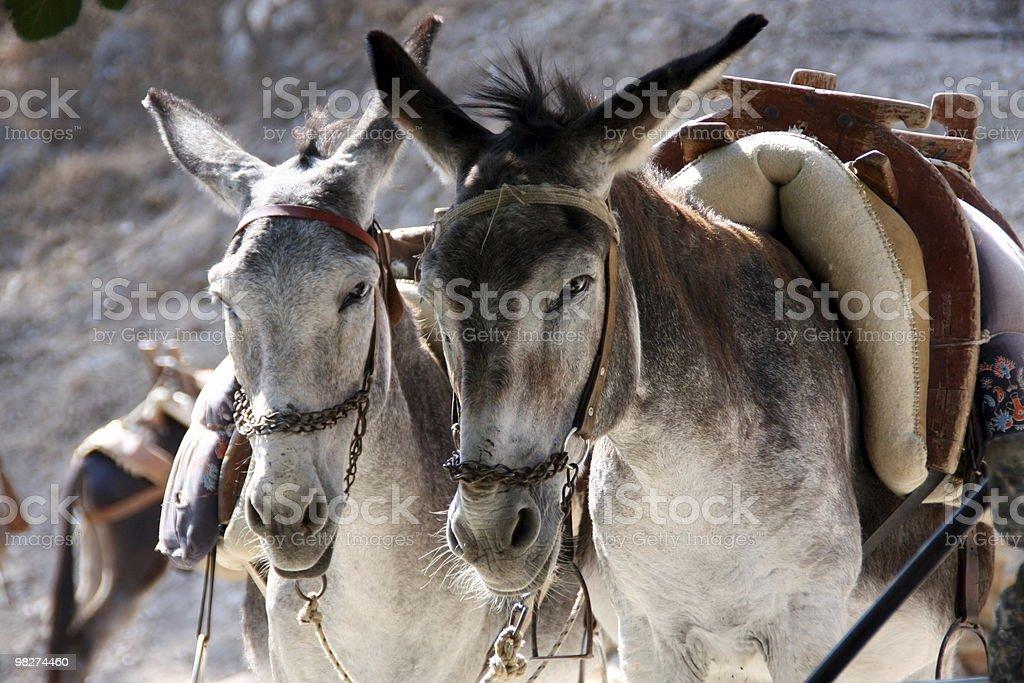 Mediterranean donkey royalty-free stock photo