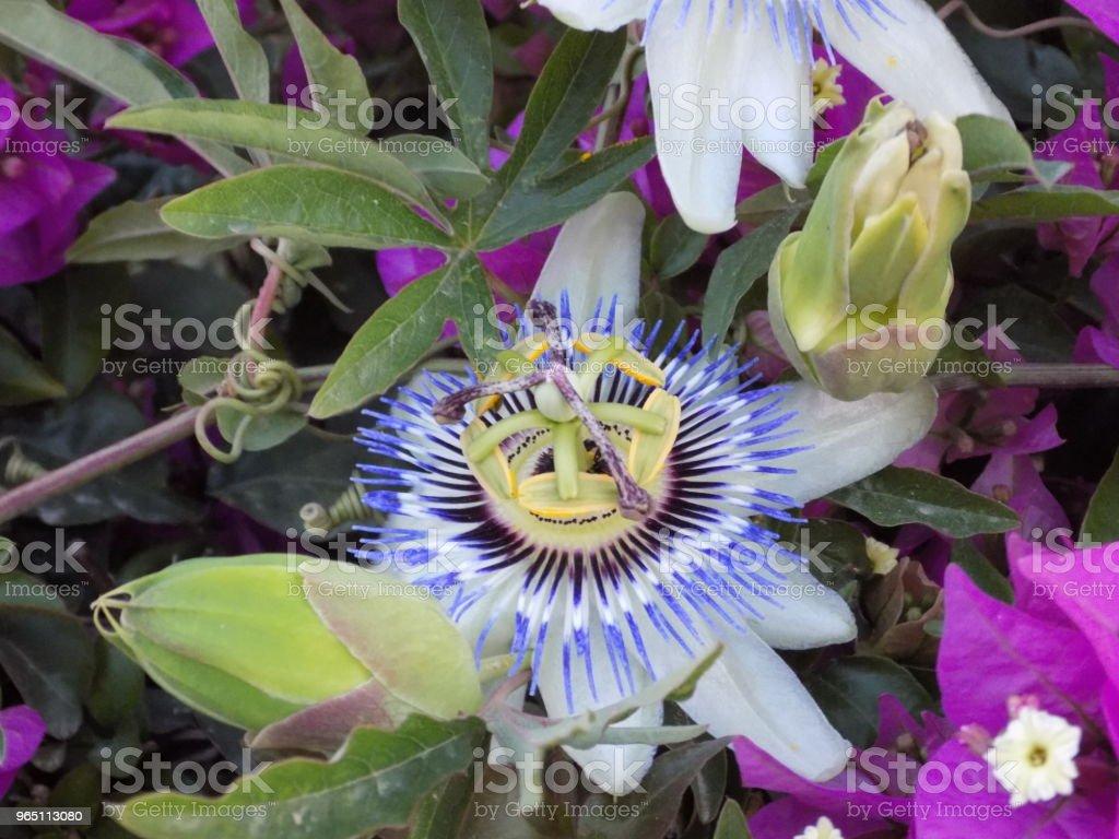 Mediterranean flower zbiór zdjęć royalty-free