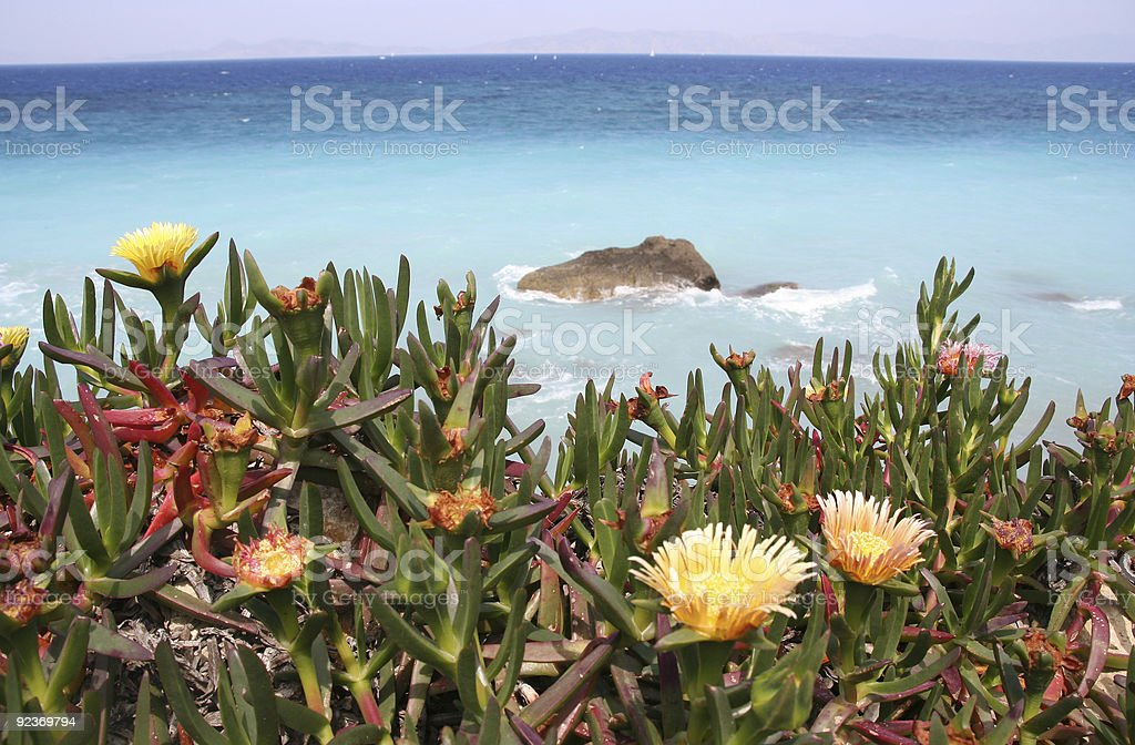 Mediterranean Flowers royalty-free stock photo