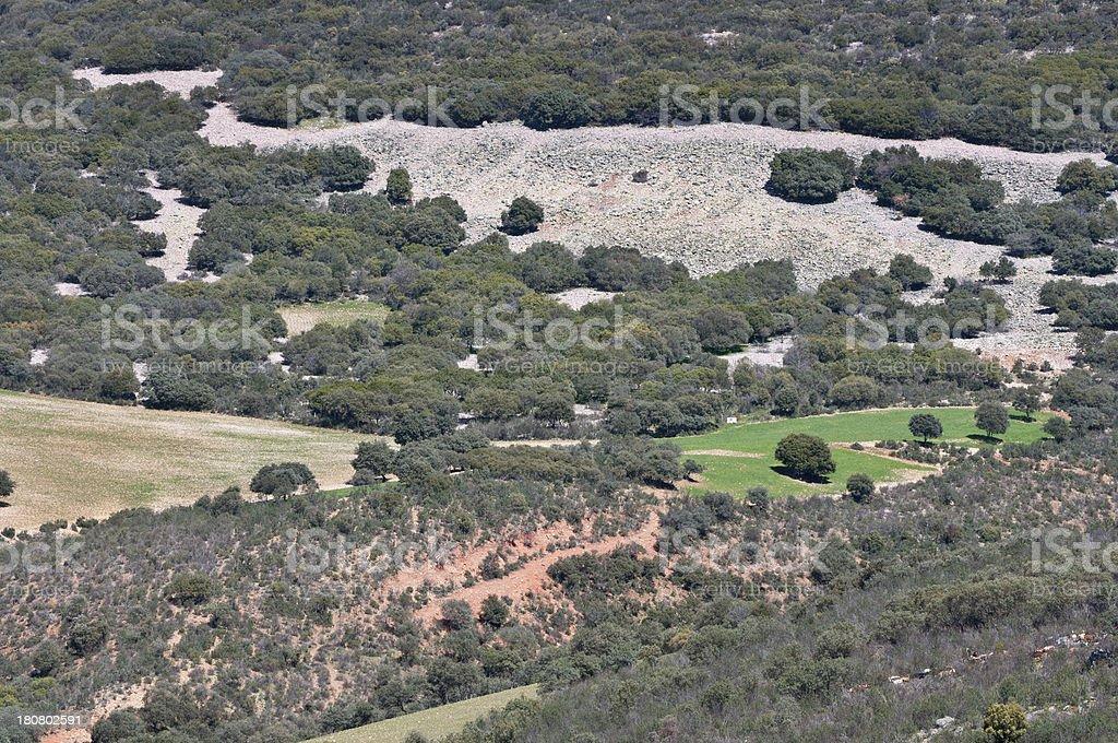 Mediterranean forest stock photo