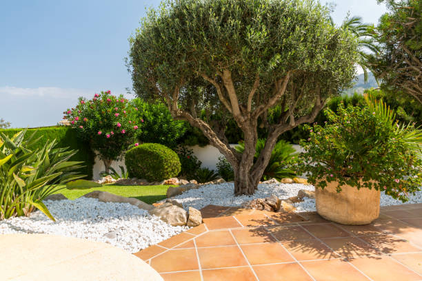Mediterranean garden with olive tree, plants and garden path stock photo
