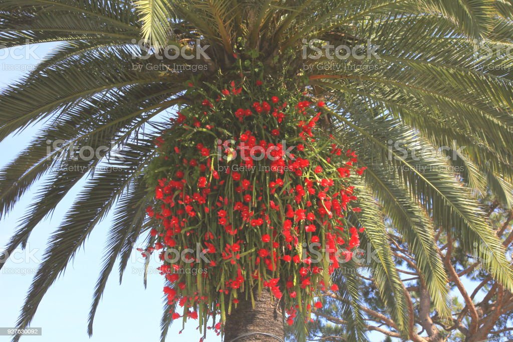 Mediterranean gardens – tropical palm tree and orchid flowers –...