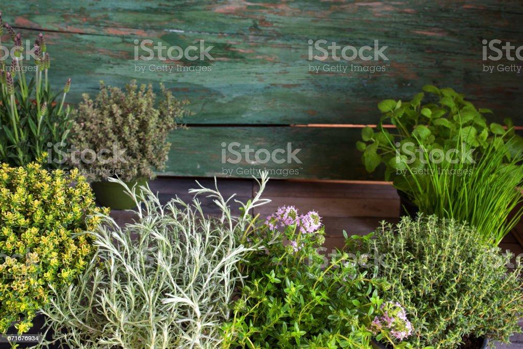 Mediterranean herbs in front of rustic wood stock photo