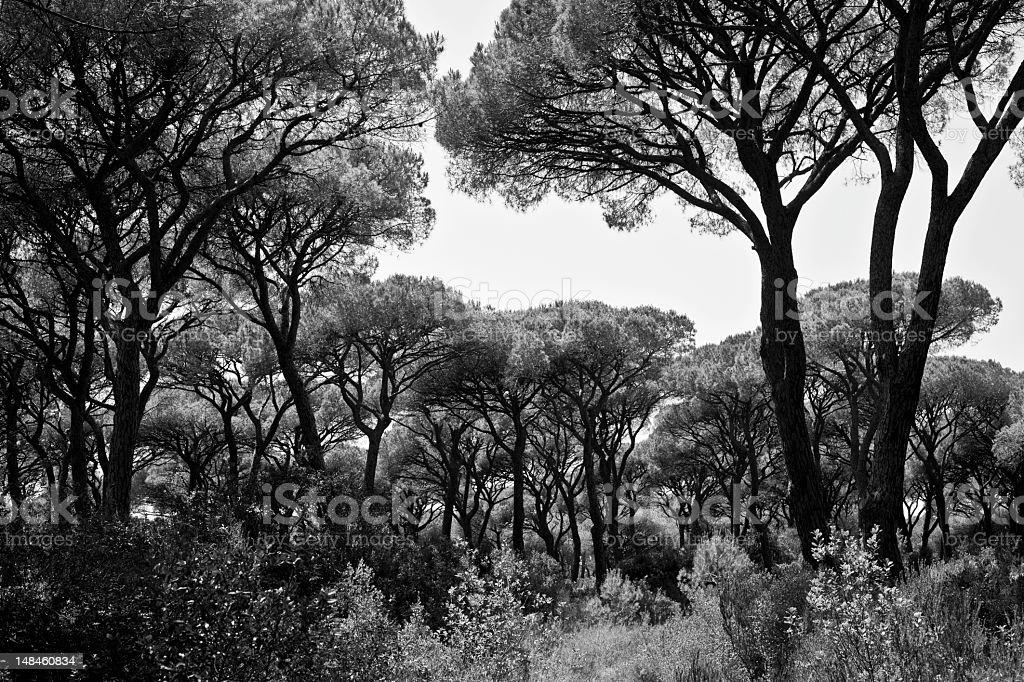 Mediterranean Maquis, B&W stock photo