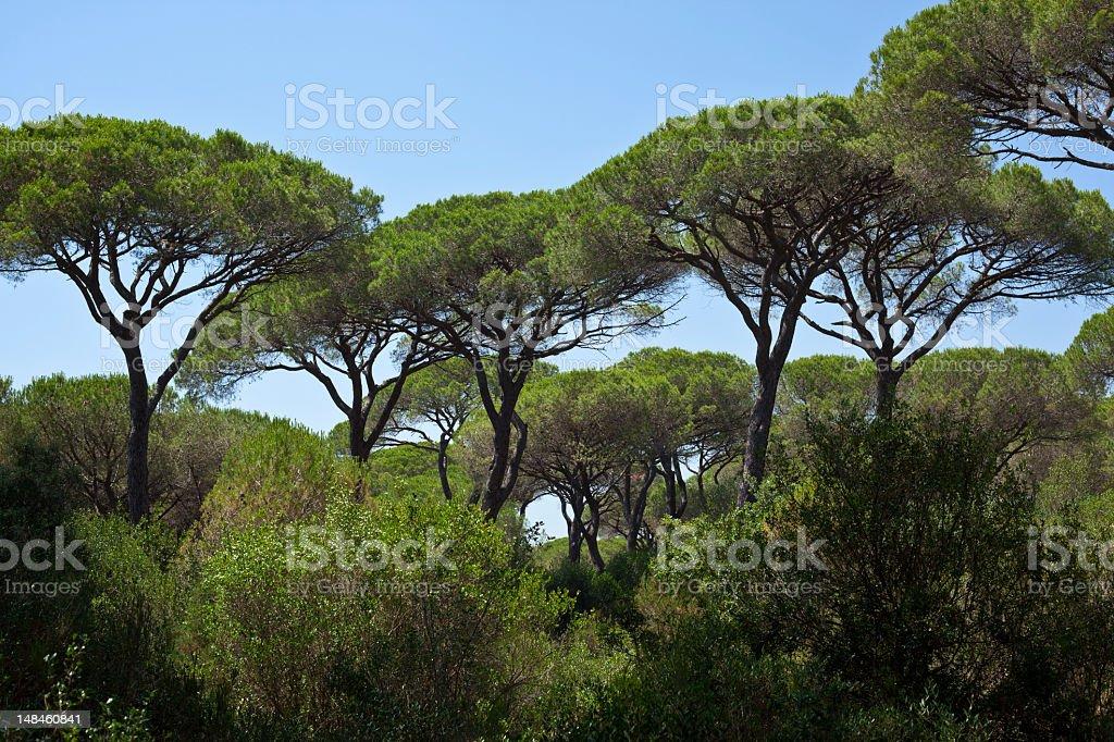 Mediterranean Maquis royalty-free stock photo