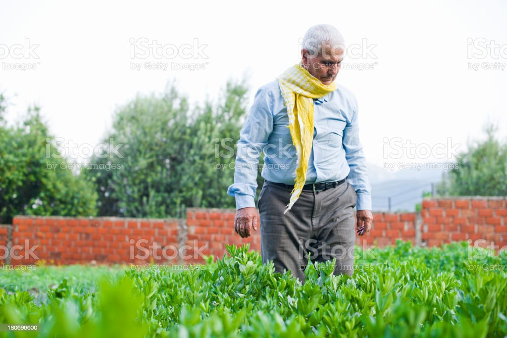 Mediterranean Senior Agriculturist royalty-free stock photo