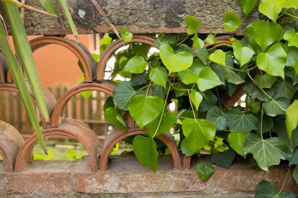 jardín de estilo mediterráneo durante la primavera - carlosanchezpereyra fotografías e imágenes de stock
