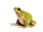 Cute frog vector cartoon characters set.