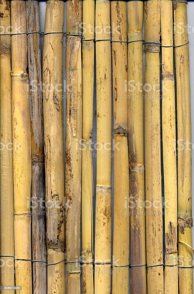 medium bamboo sliced royalty-free stock photo