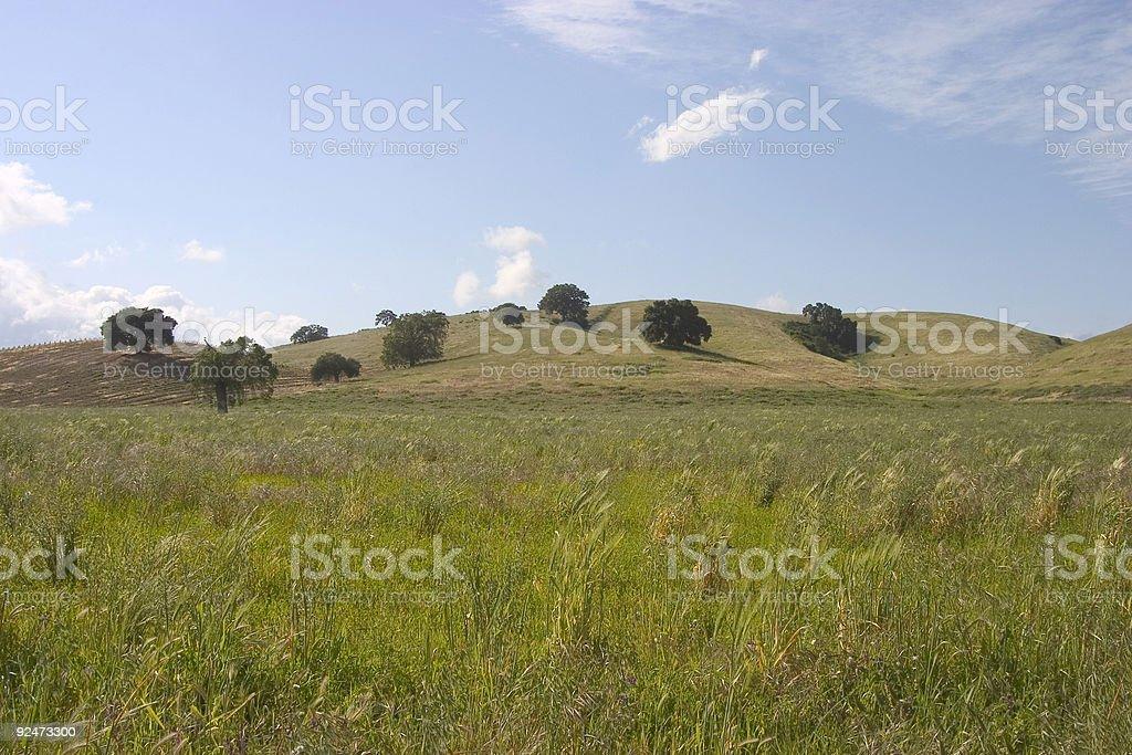 Medow Land royalty-free stock photo