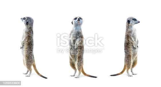 istock Meerkat Isolated Set 1059533600