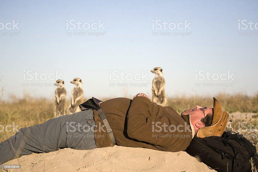 Meerkats auf Fotografen – Foto