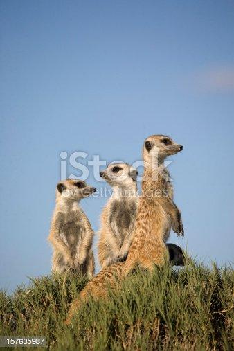 Taken in the Kalahari, Botswana