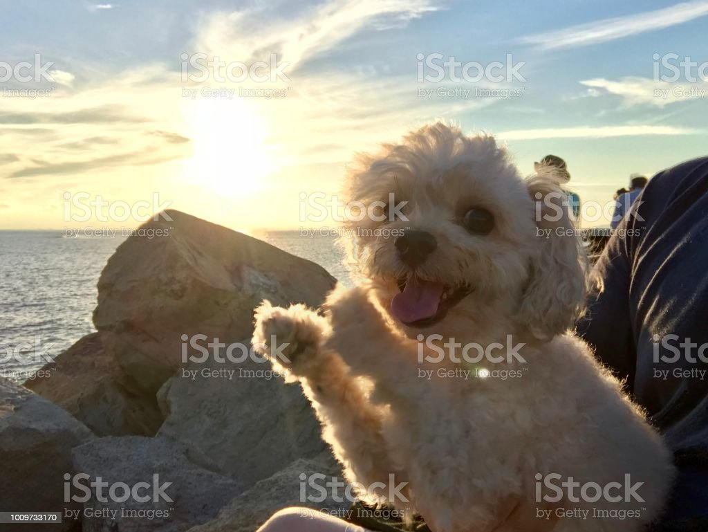 Meet the Sunset royalty-free stock photo