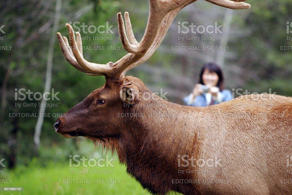 site de rencontre de la faune