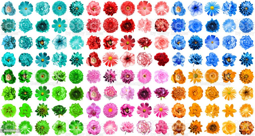 Mega pack of 120 in 1 natural and surreal blue, orange, red, green, turquoise and pink flowers isolated on white stock photo