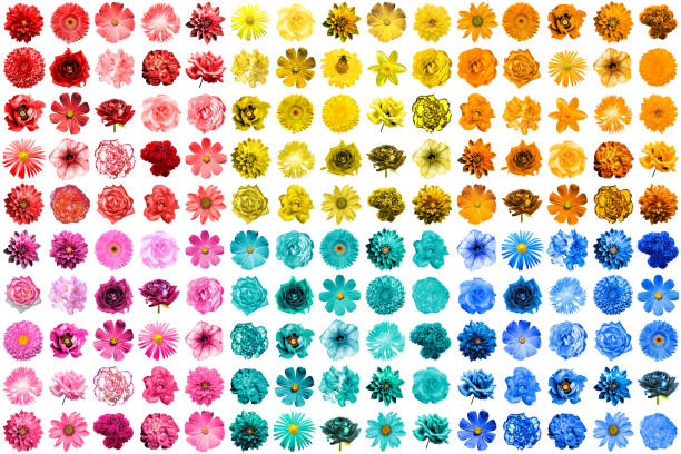 Mega pack of 150 in 1 natural and surreal blue yellow red pink and picture id867176502?b=1&k=6&m=867176502&s=612x612&w=0&h=u7r x0ssym5 fvblxwm28 lzcwq buyv1ztgme4bnaq=