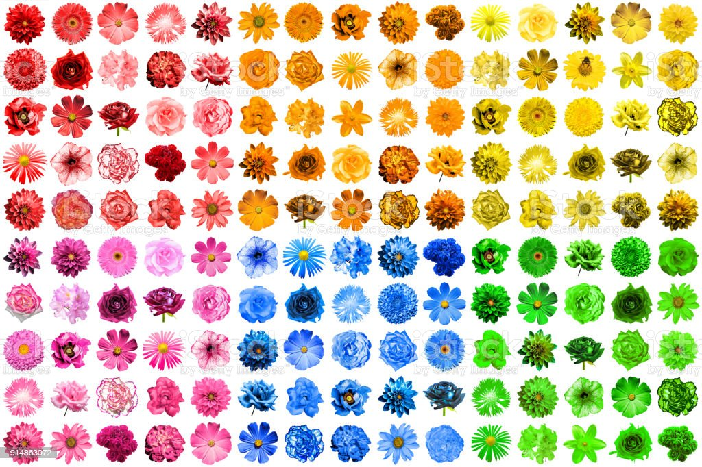 Mega pack of 150 in 1 natural and surreal blue, yellow, red, pink, green and orange flowers isolated on white stock photo