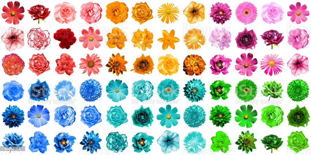 Mega pack of 72 in 1 natural and surreal blue, orange, red, green, turquoise and pink flowers isolated on white stock photo