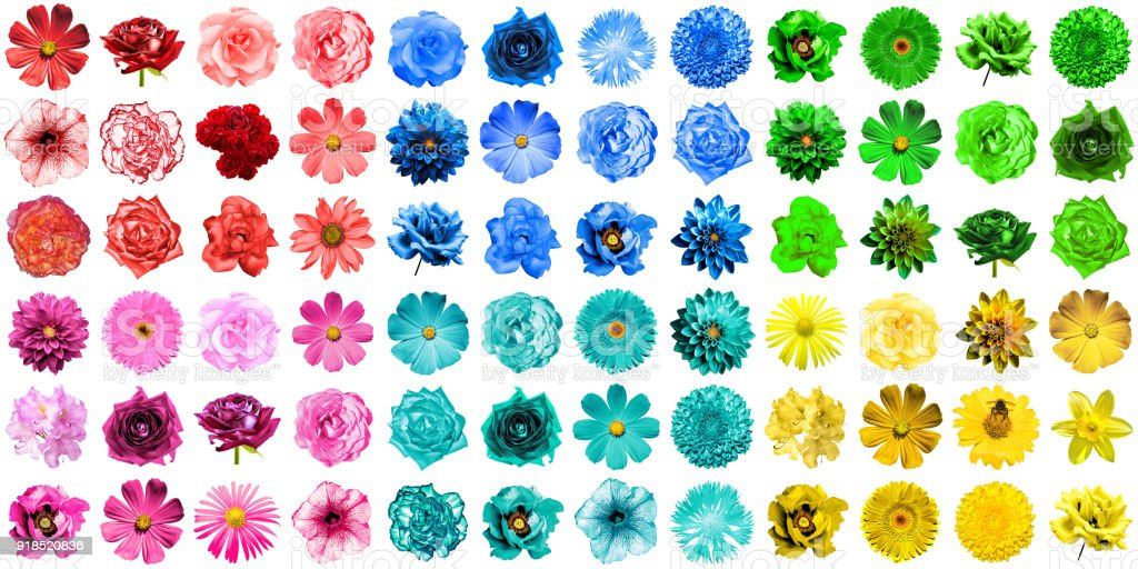 Mega pack of 72 in 1 natural and surreal blue, yellow, red, green, turquoise and pink flowers isolated on white stock photo