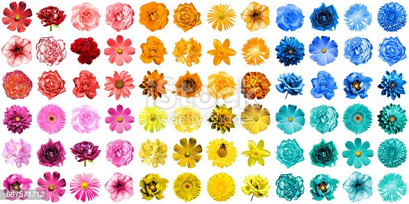Mega pack of 72 in 1 natural and surreal blue, yellow, red, orange, turquoise and pink flowers isolated on white