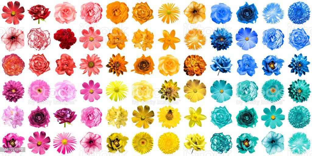 Mega pack of 72 in 1 natural and surreal blue, yellow, red, orange, turquoise and pink flowers isolated on white - foto de stock