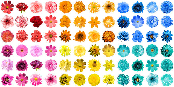Mega pack of 72 in 1 natural and surreal blue, yellow, red, orange, turquoise and pink flowers isolated on white stock photo