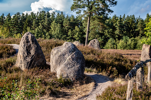 megalith monument in german heath landscape with blooming heather plants