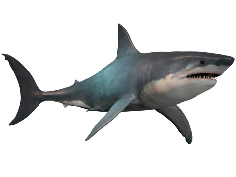 The Megalodon is an extinct megatoothed shark that existed in prehistoric times, from the Oligocene to the Pleistocene Epochs.
