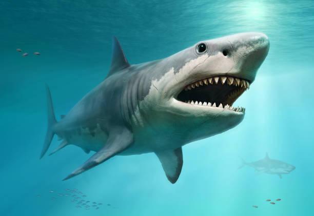 megalodon scene 3d illustration - squalo foto e immagini stock