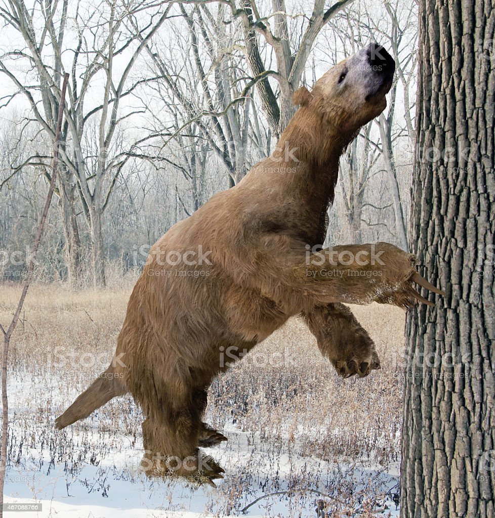 Megalonyx Searching Tree stock photo