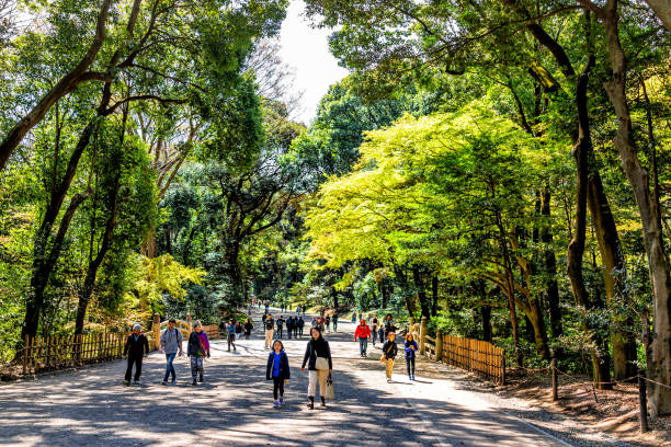Meiji shrine park with green trees forest landscape during spring and many people walking stock photo