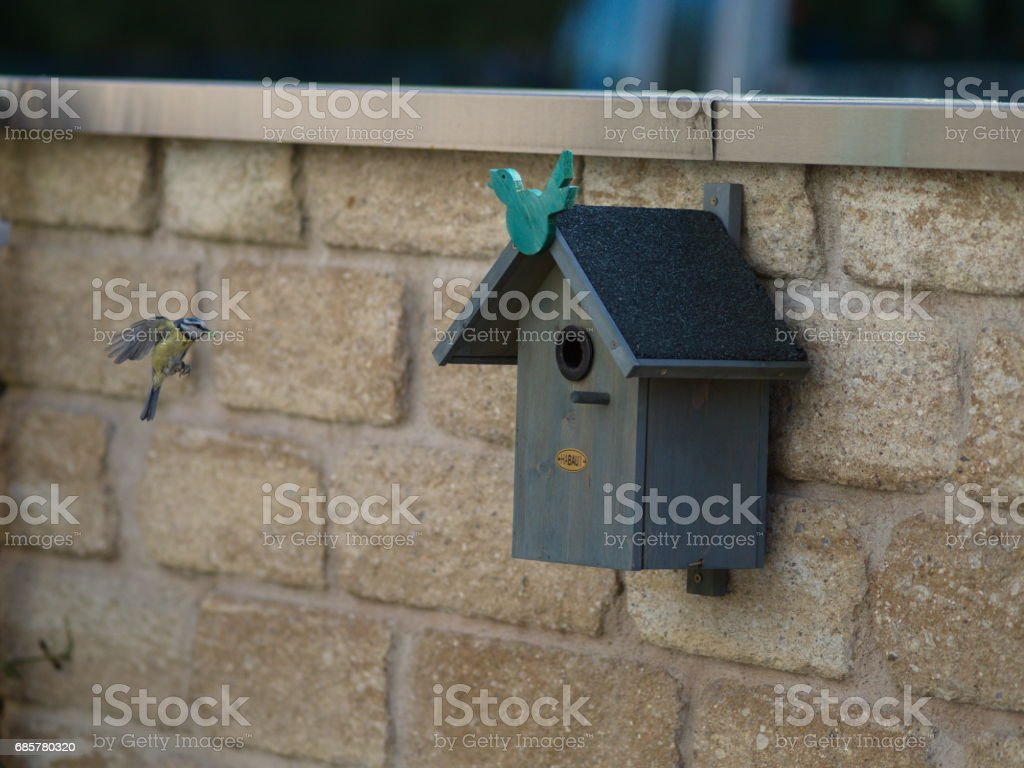 Meise im Landeanflug - tit lands at the nesting box royalty-free stock photo