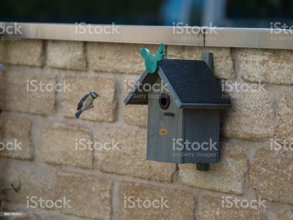 Meise im Landeanflug - tit lands at the nesting box Lizenzfreies stock-foto