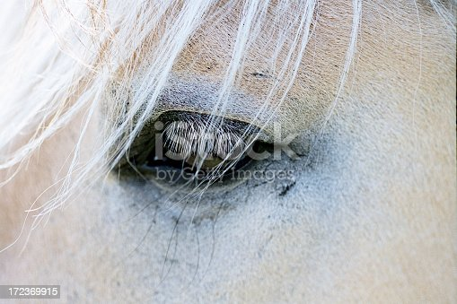 The eye of a Norwegian Pony - a shot from the countryside of Denmark.Similar images in my lightbox Photos with Golden Colors