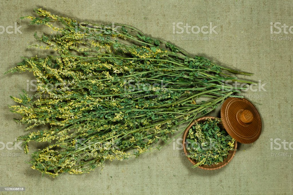 Melilot. Dry herbs for use in alternative medicine, phytotherapy,...