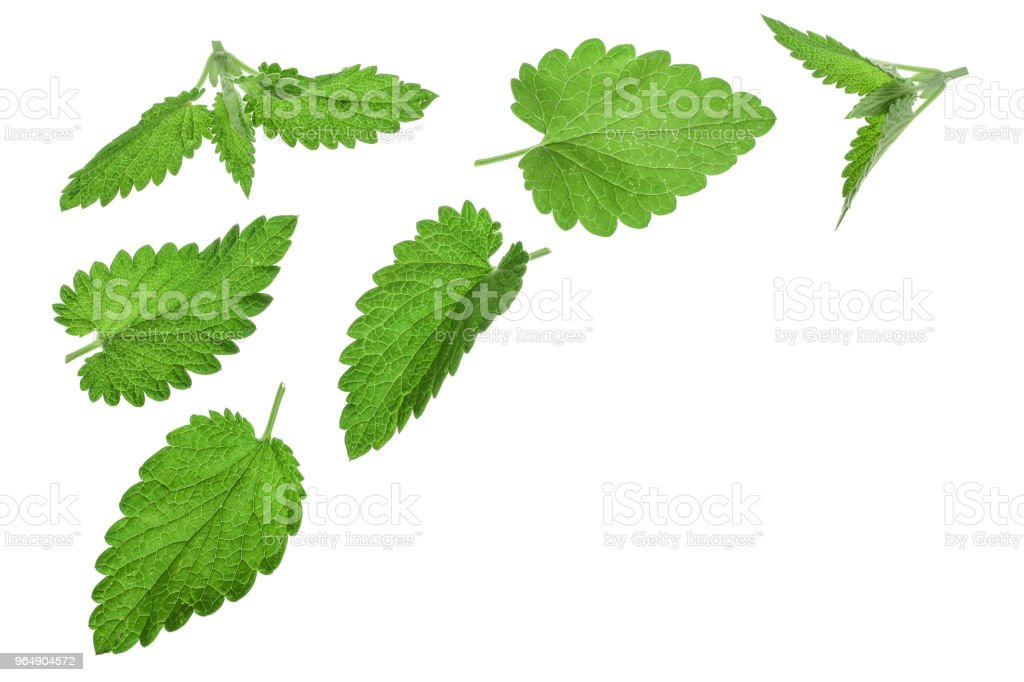 Melissa leaf or lemon balm isolated on white background with copy space for your text. Top view. Flat lay pattern royalty-free stock photo
