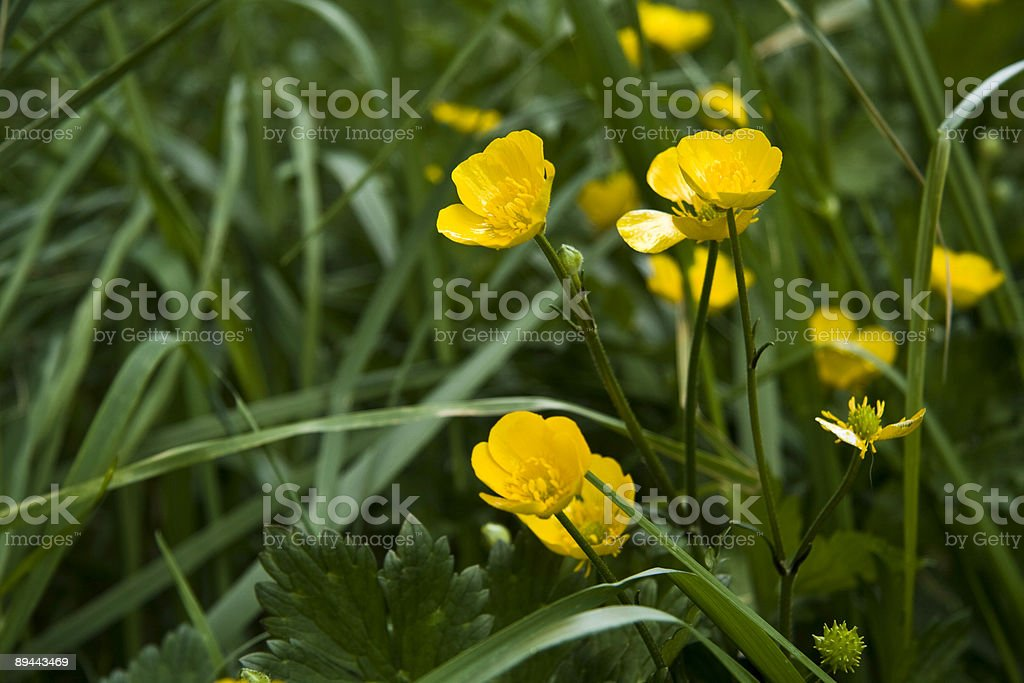 Mellow Yellow royalty-free stock photo