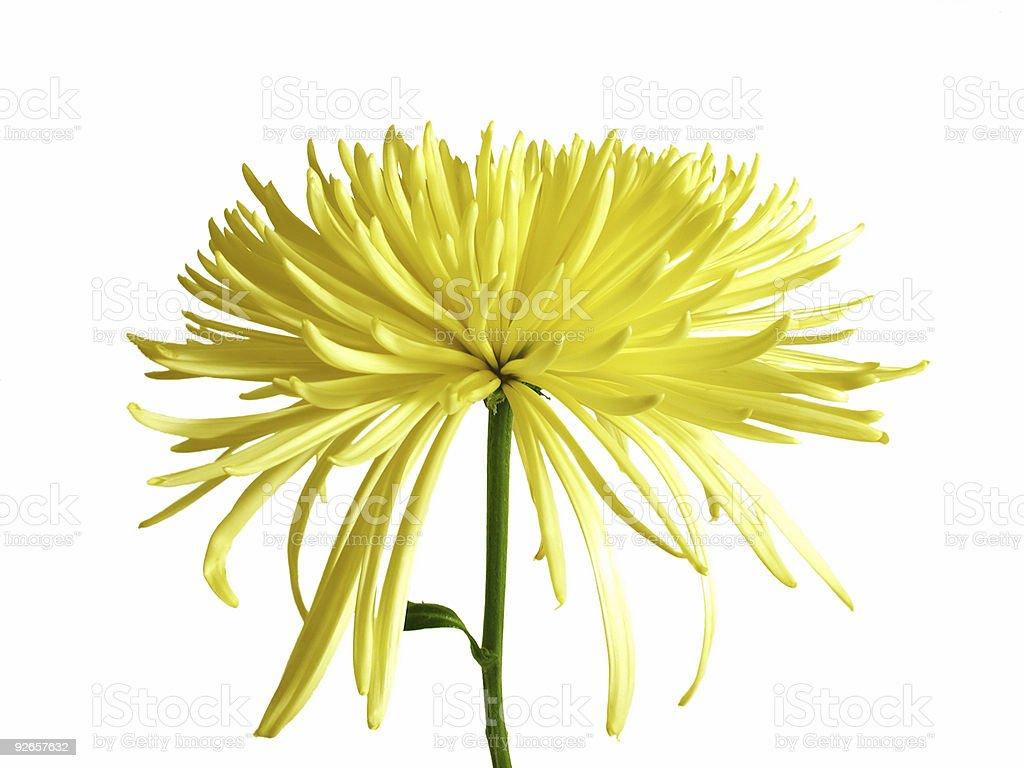 Mellow Yellow royalty-free stock photo