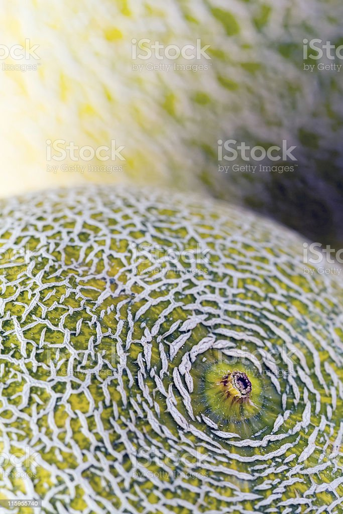 Melon royalty-free stock photo