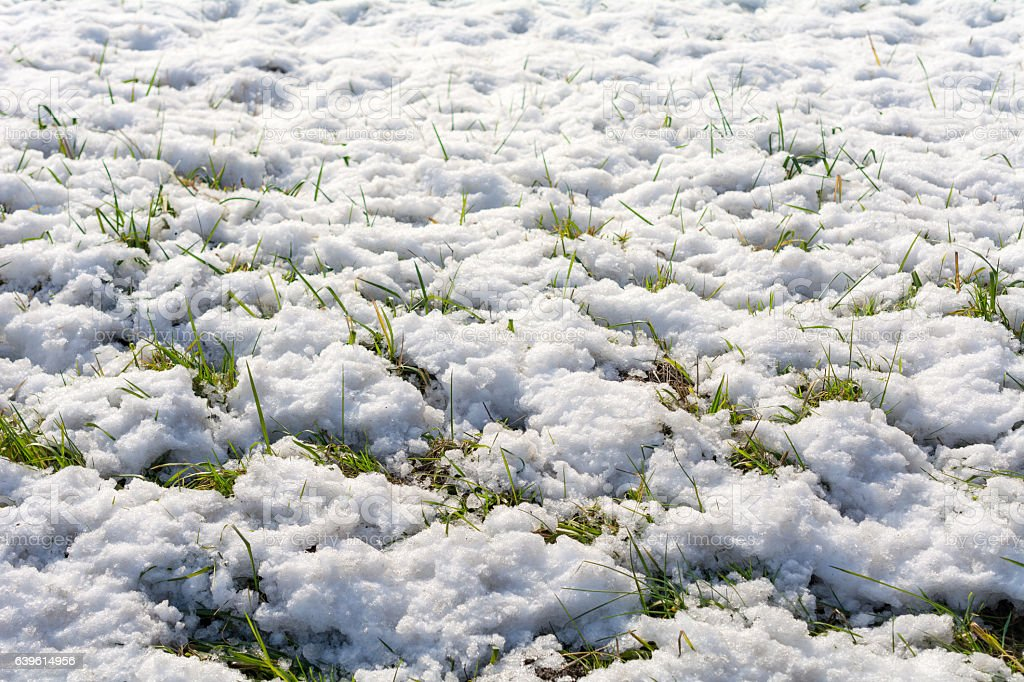 Melting snow and ice reveals some of the grass stock photo