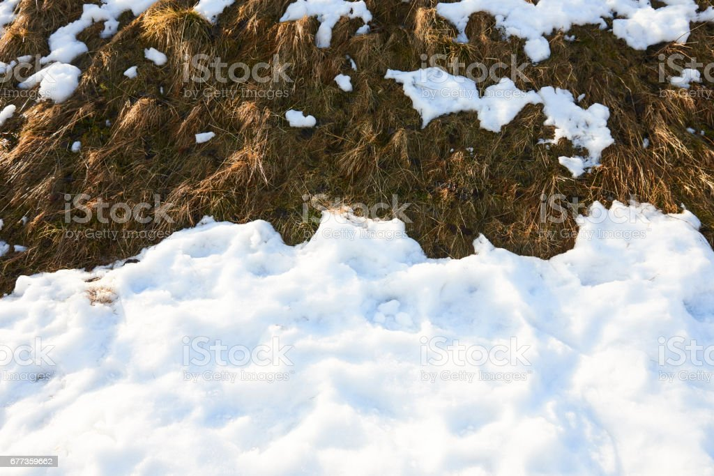 Melting snow on old grass close up stock photo