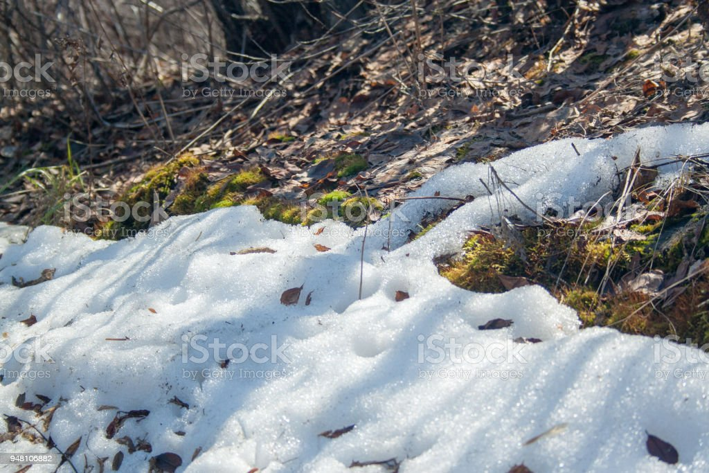 Melting snow with green moss stock photo